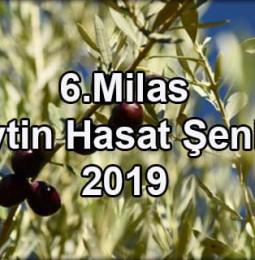 6. Milas Zeytin Hasat Şenliği 2019