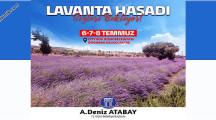 Didim'de 6 Temmuz'da Lavanta Hasadı Sizleri Bekliyor